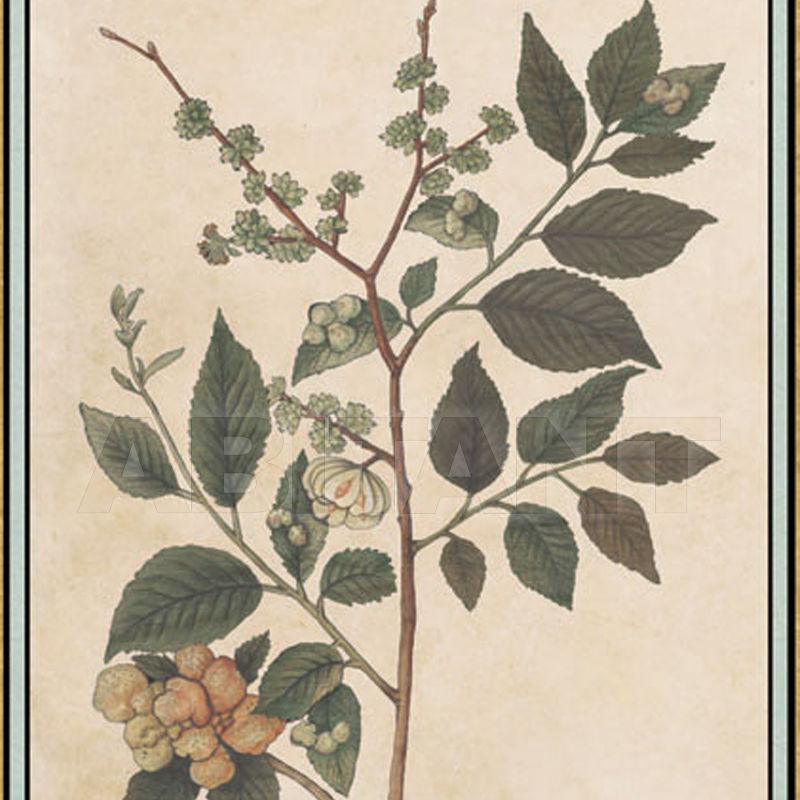renaissance herbier