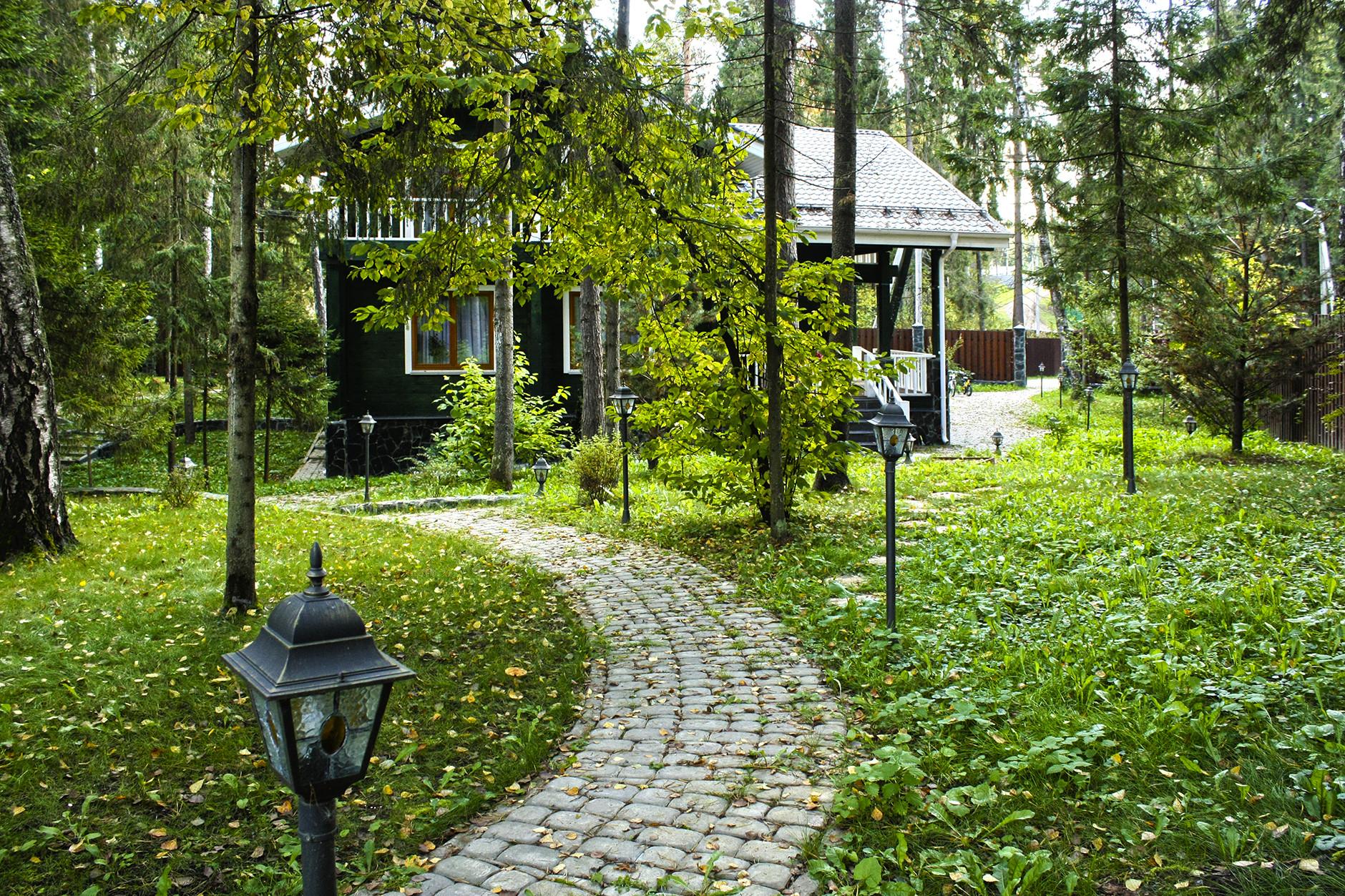 Лесной дизайн на участке